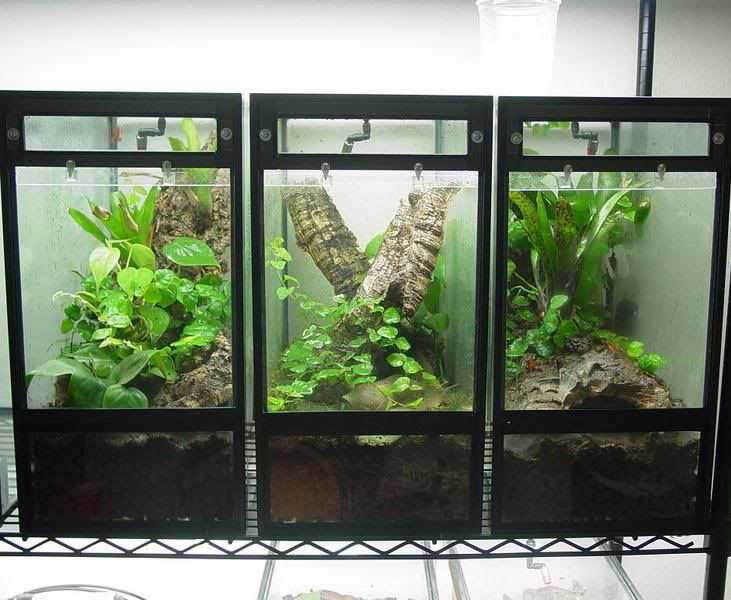 How to make a terrarium out of a 10 gallon fish tank