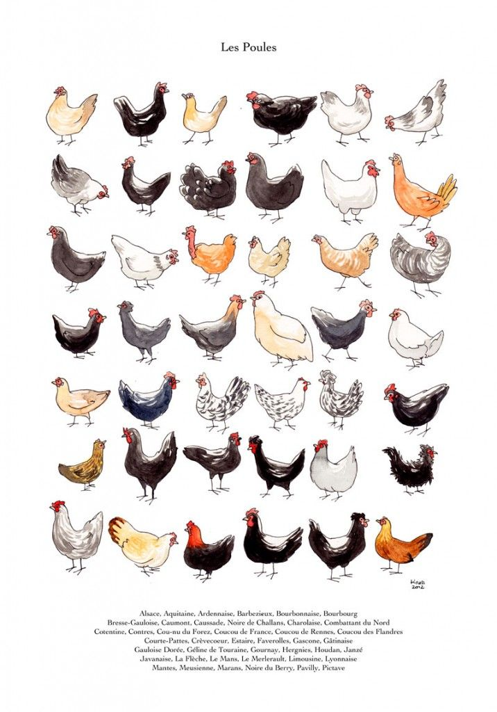 Poules pinteres for Poules decoration