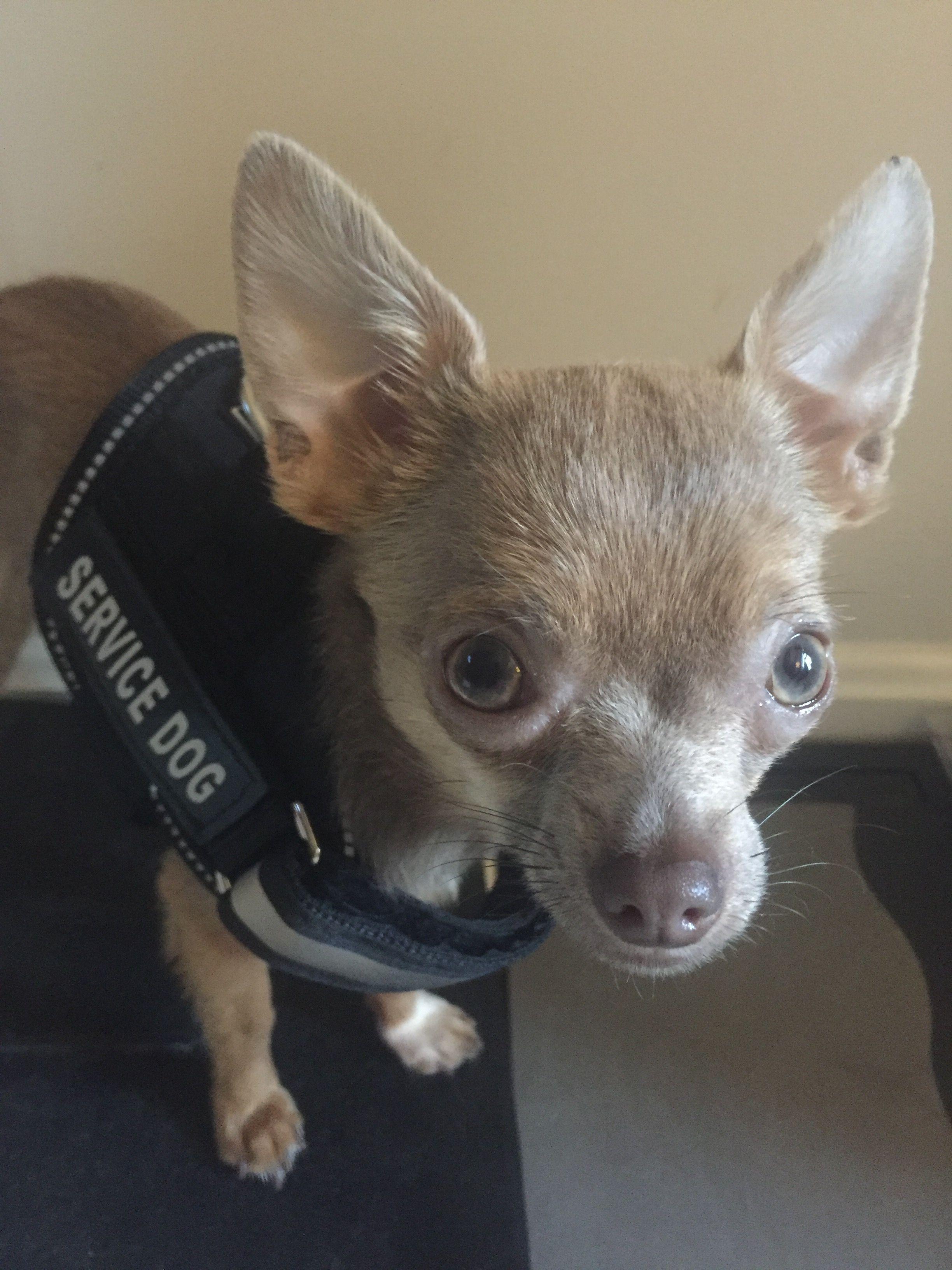 Registration Information Service Dog And Emotional Support Animal