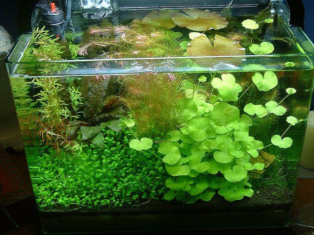 6 gallon nano there is no space for fish aquatic for Plante nano aquarium