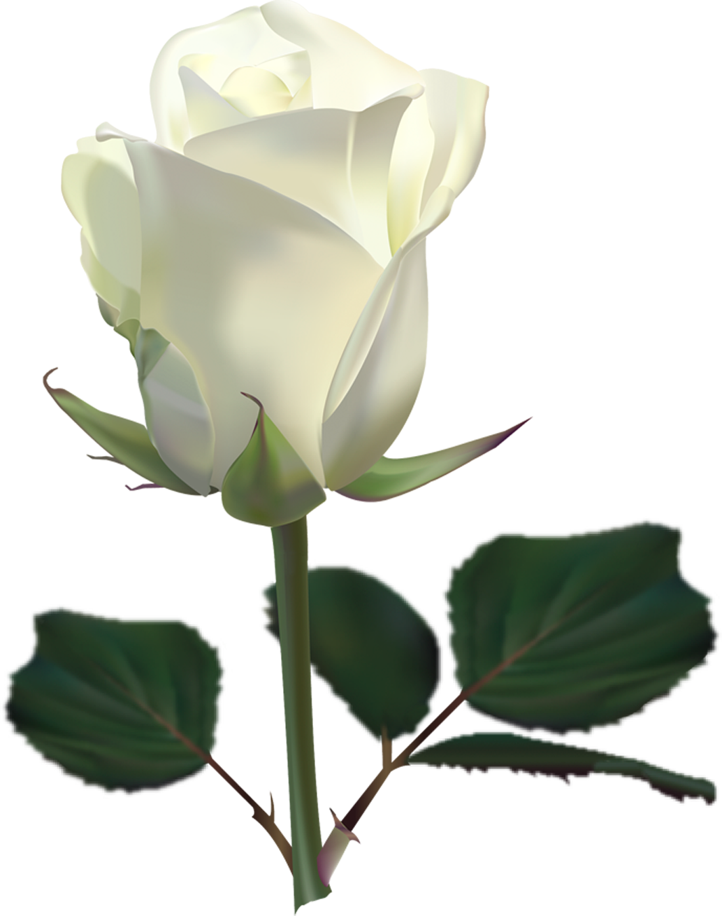 White roses PNG images, free download flower pixtures. And a few ...