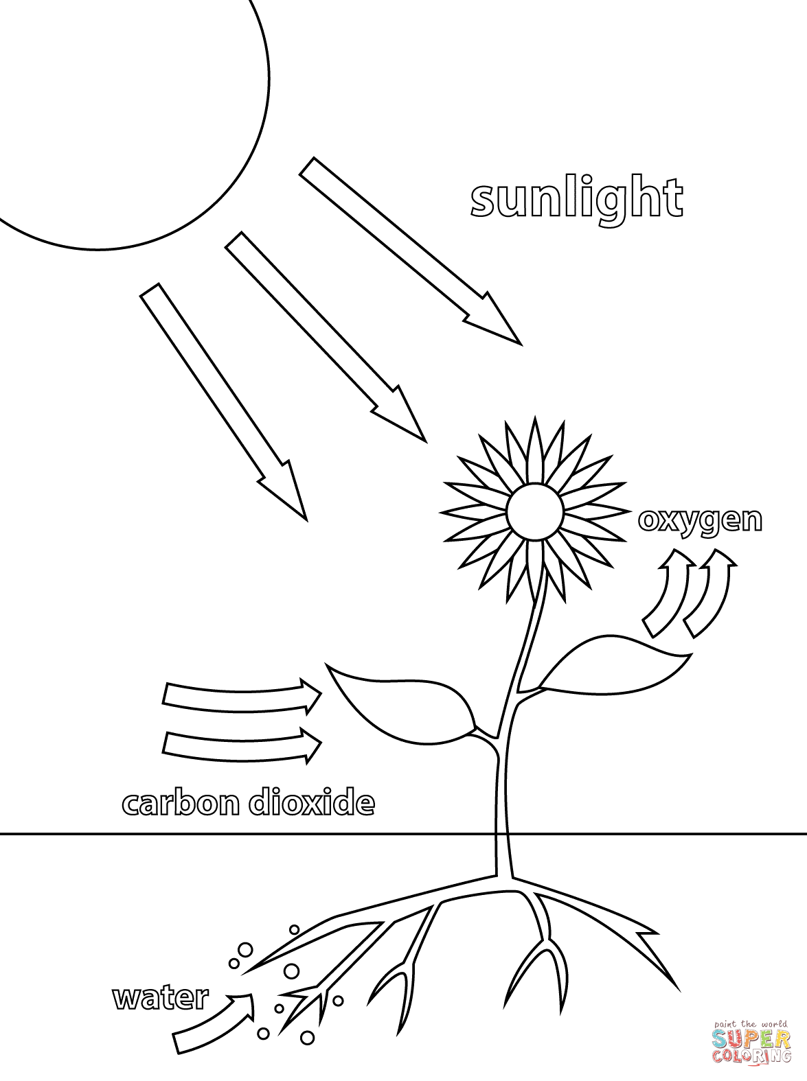 Photosynthesis Super Coloring
