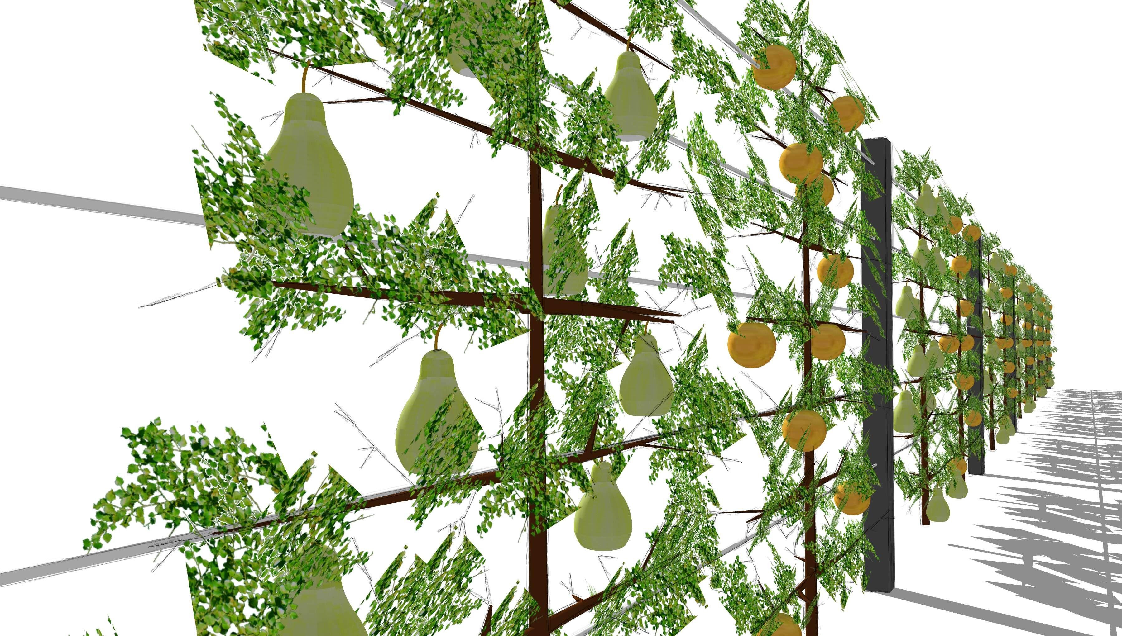 Sichtschutz Mit Spalierobst Aluminiumpfosten Und Edelstahlseilen