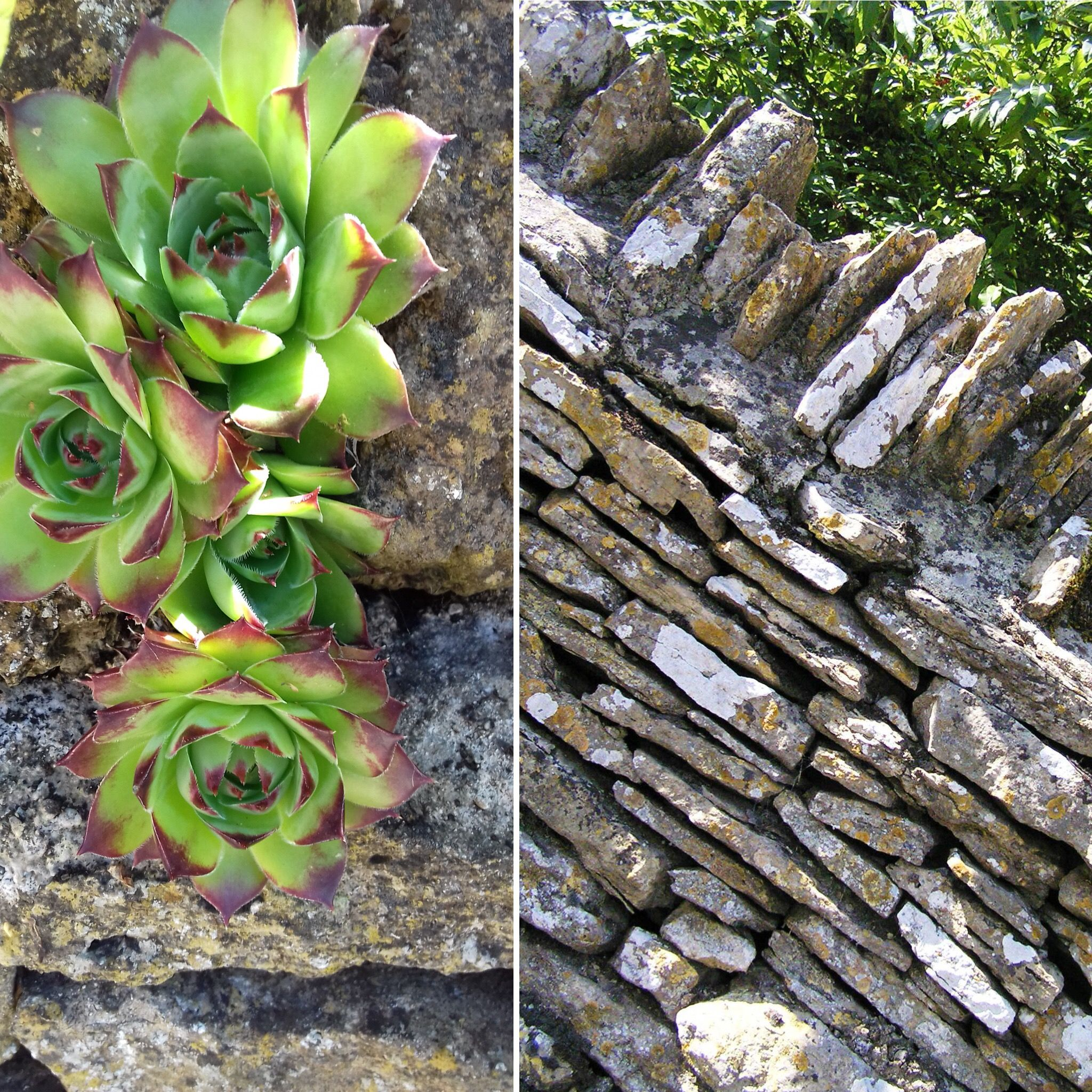 Succulents Love The Nooks And Crevices Of Our Dry Stone