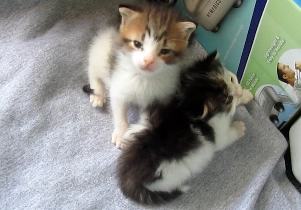Garbage Collector Found Kittens In Brush Pile He Couldn T Leave Them There