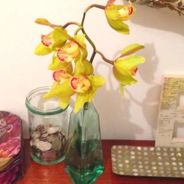 Orchids from my neighbour