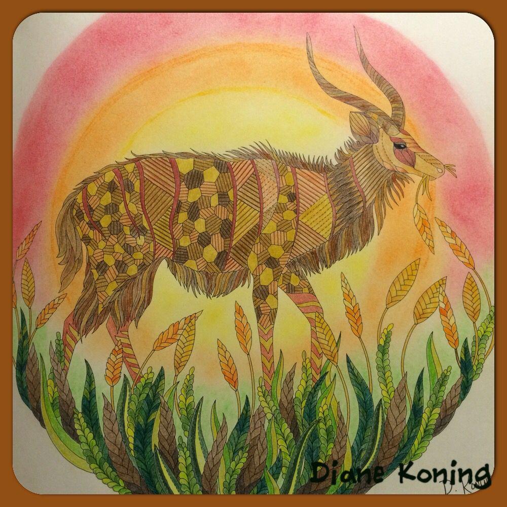 Uit de savanne gekleurd met potlood magic potloden en achtergrond