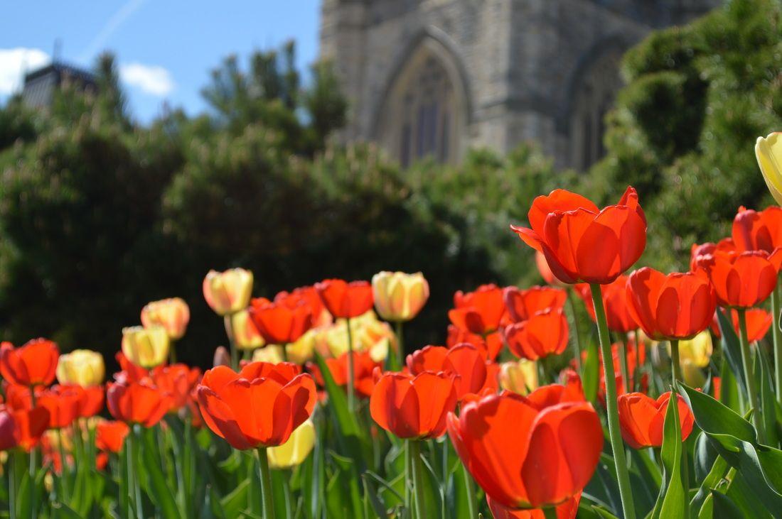 21 Cozy Microadventures For Ottawa Travellers Turnipseed Travel Ontario Travel Ontario Canada Travel Toronto Travel