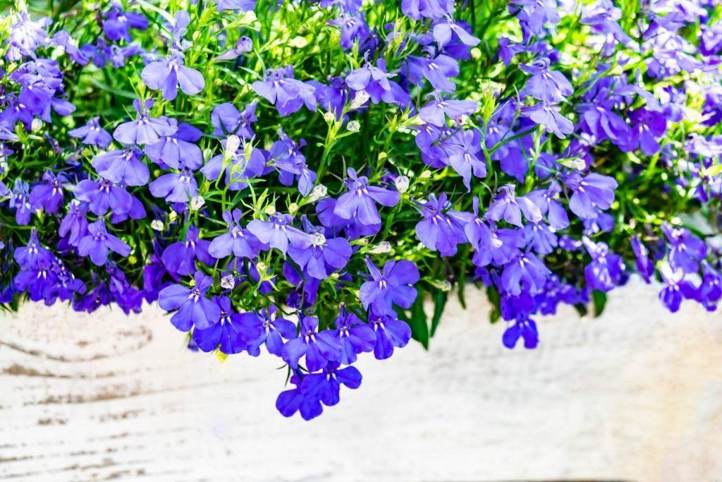 Pflanzen Für Bienen