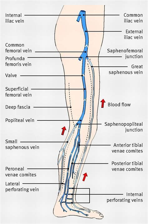 Image result for ultrasound upper extremity venous anatomy ...