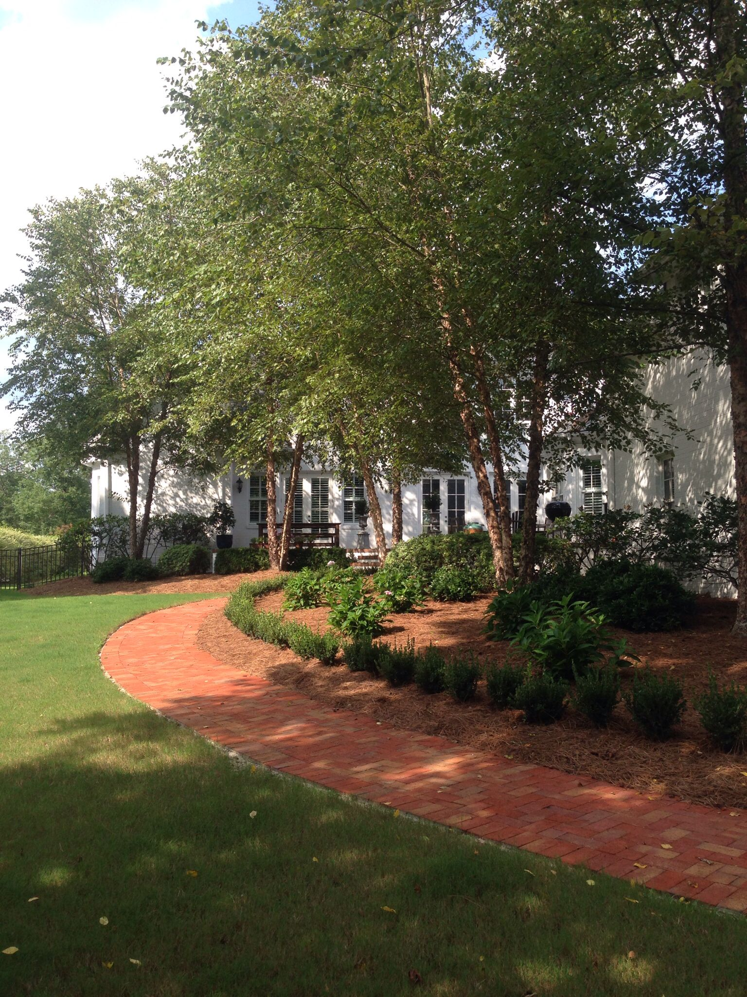 River birch, brick walkway, boxwood, landscaping design Wilmington NC - River Birch, Brick Walkway, Boxwood, Landscaping Design Wilmington