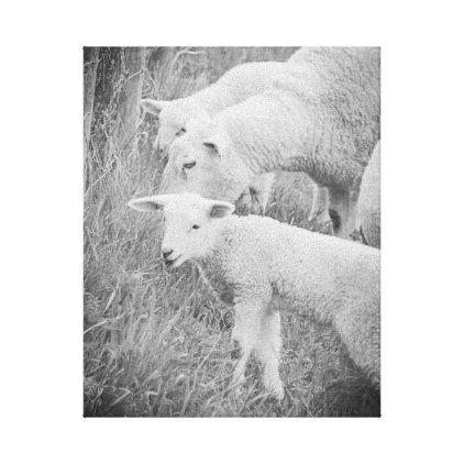 Photo of Lamb Sheep Baby Animals Black and White Canvas Print | Zazzle.com
