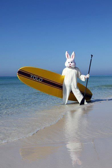Easter Bunny Blames Laird Too Aloha And Happy Easter From The Hamiltons This Bunny Was Spo Myrtle Beach Vacation Rentals Myrtle Beach Vacation Surfside Beach