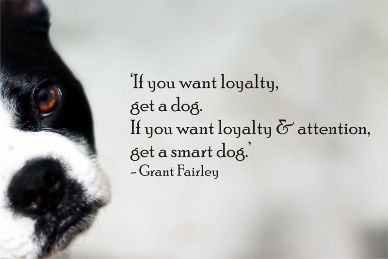If you want loyalty and attention, get a smart dog - Quote by grant fairley