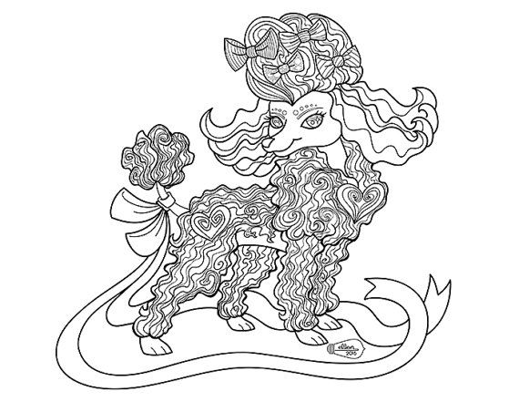 Cute Frilly Toy Poodle Adult Coloring Page Digital Stamp Toy Poodle Adult Poodle Card Poodle Drawing