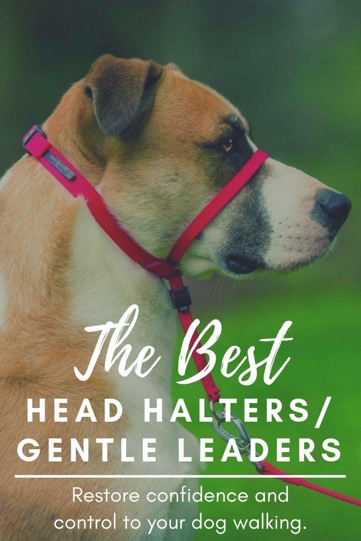 Best dog head halters and gentle leaders reviewed in 2019