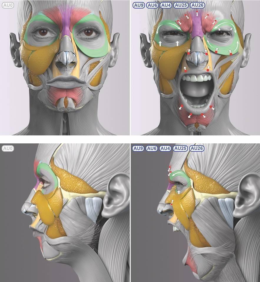 Pin von Aytaç Armağan auf Anatomy | Pinterest | hilfreiche Hinweise ...