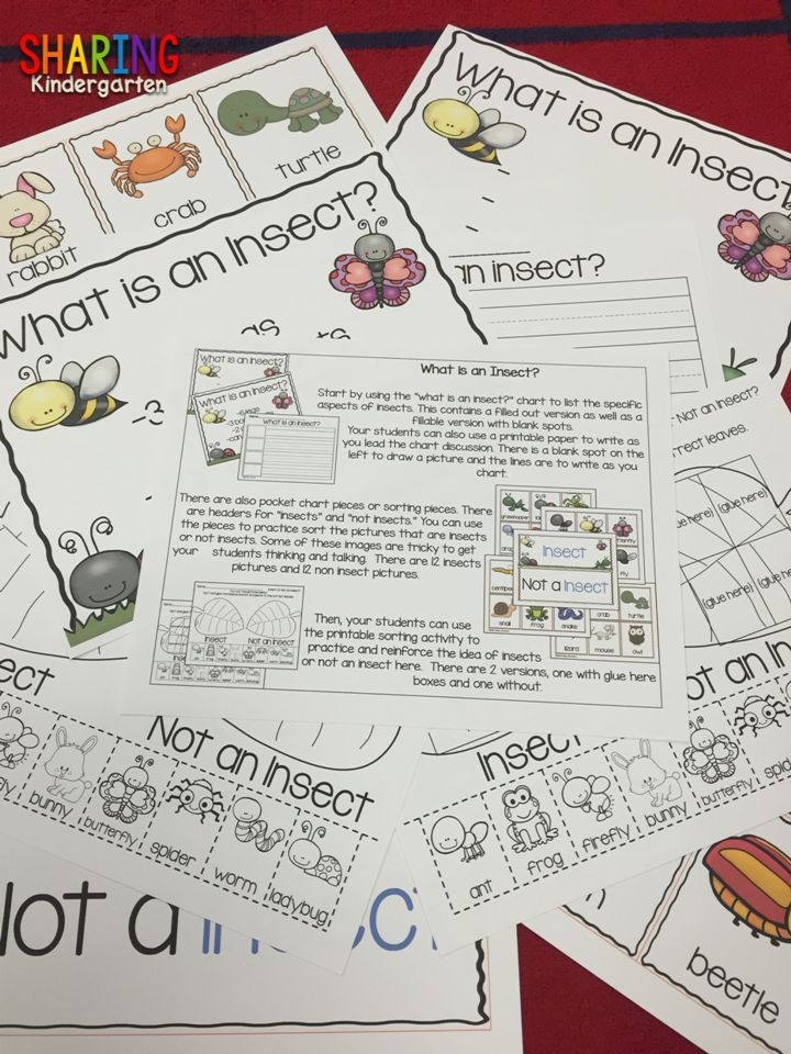 What is an insect? Science Activities for Preschool, Kindergarten and 1st Grade