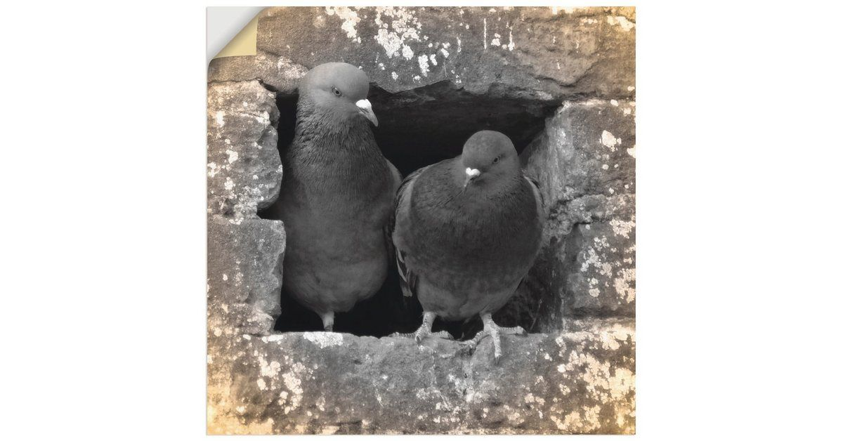 Premium Wandfolie »Kattobello: Tauben Liebe«