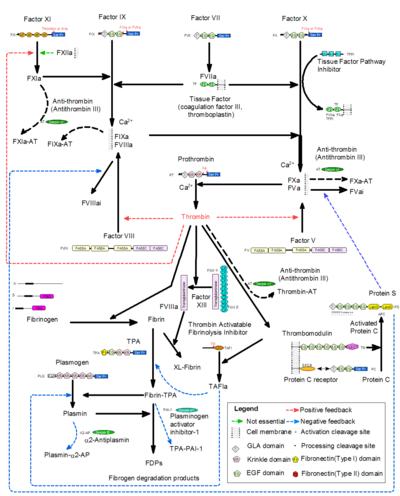 Ciencias De Joseleg Introduccion Al Problema De La Cascada De Coagulacion Problemas Cascadas Ciencia