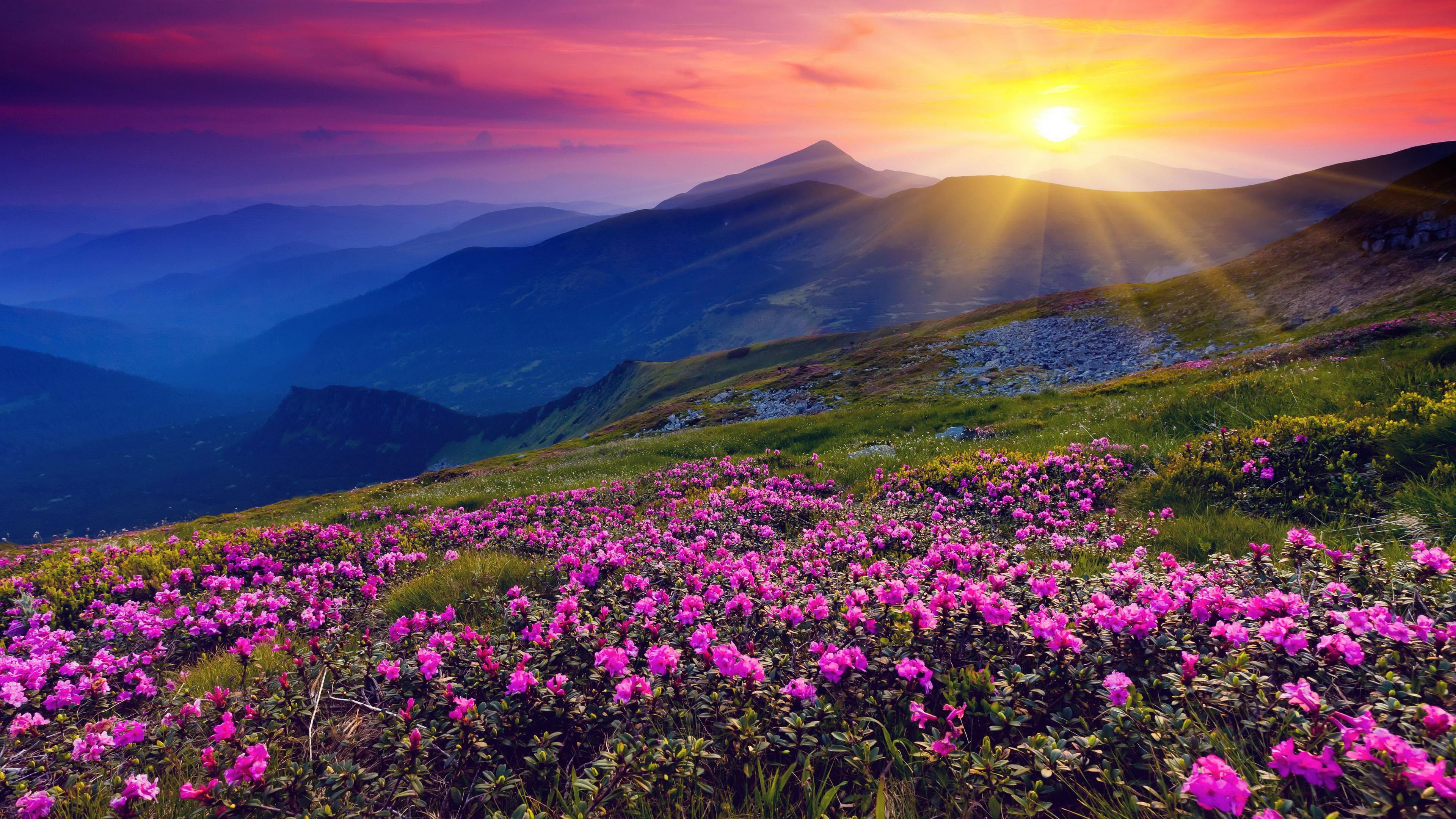 flowers hills landscape sunrise