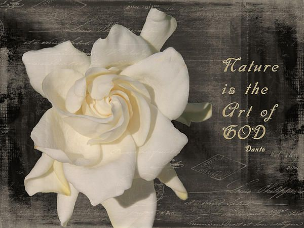 Gardenia And Quote By Rosalie Scanlon Rosalie Gardenia Amazing Art
