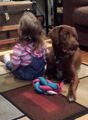 Meet Cleveland, a Petfinder adoptable Chocolate Labrador Retriever Dog | Albany, NY | Hi my name is Cleveland.  I'm a sweet boy who came from a shelter in Kentucky because my parents...