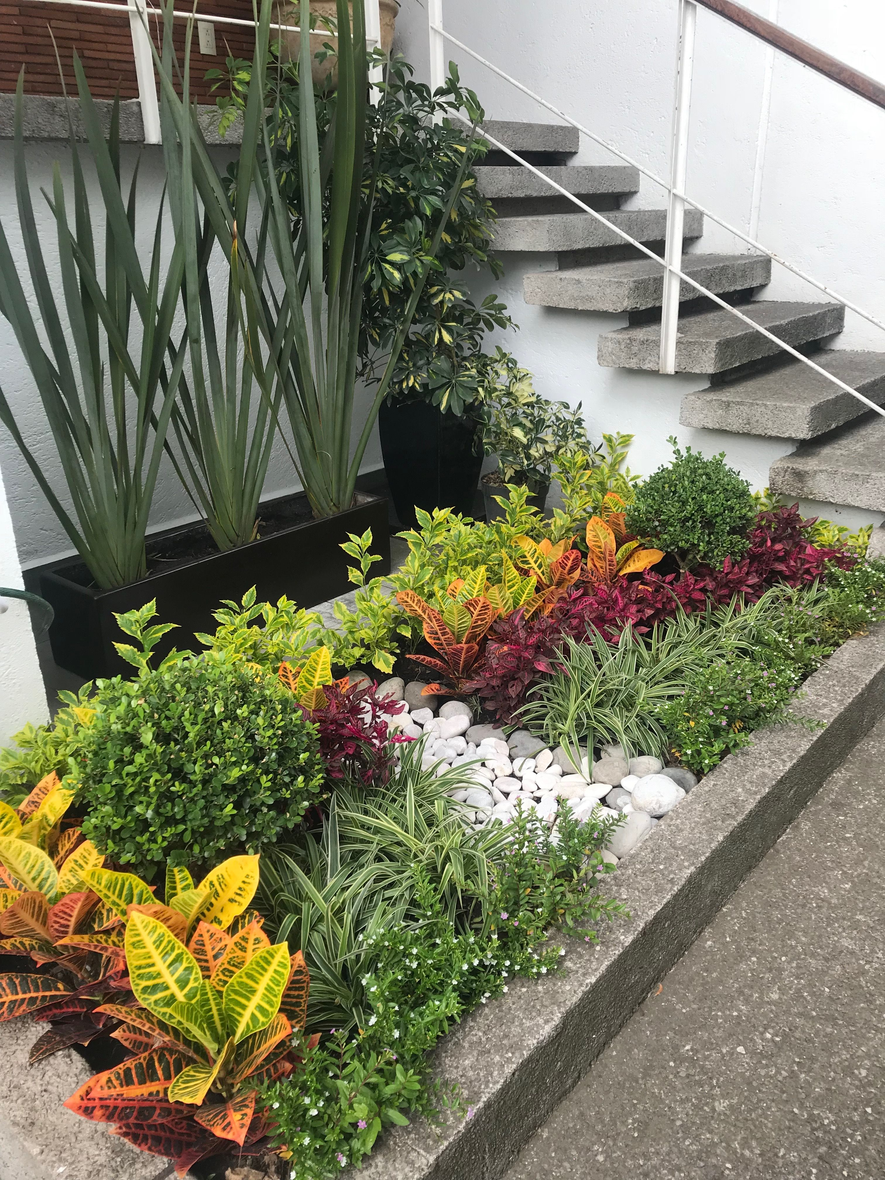 Jardín De Entrada Pequeño Y Colorido Jardines Pequeños Patios Jardín Jardín De Jardinería