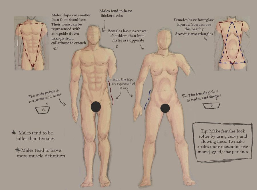Website Inspiration Male And Female Anatomy Pictures Anatomy