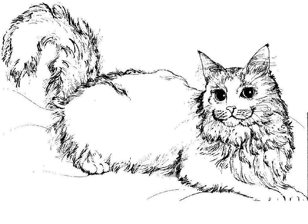 free cat coloring pages # 4