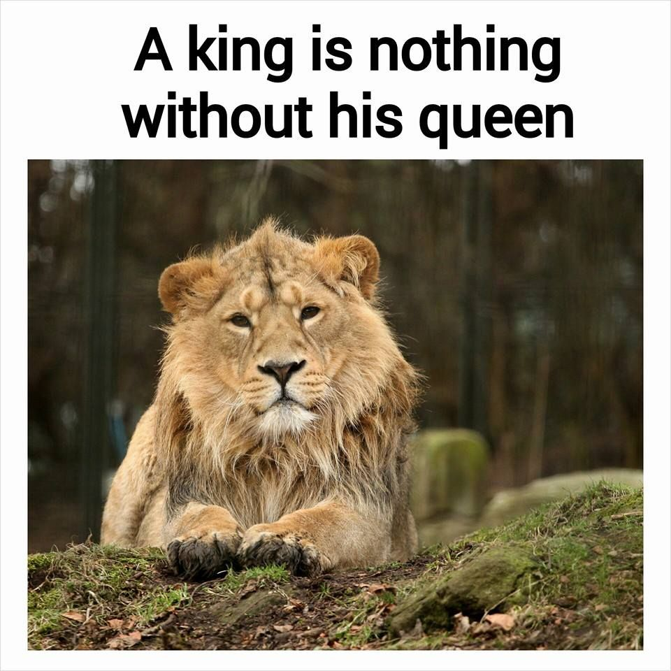 Image result for A king is nothing without his queen