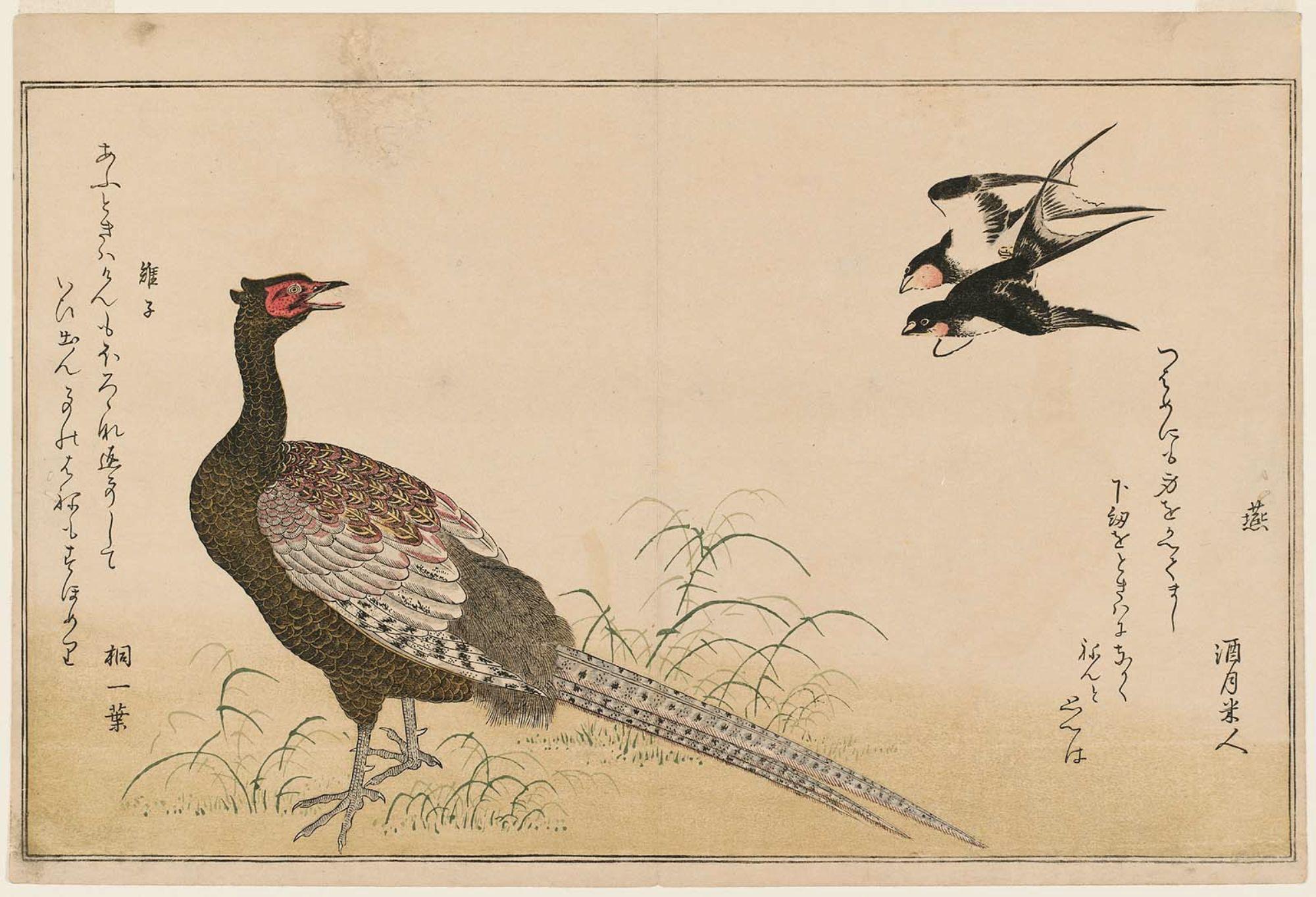 Kitagawa Utamaro Swallows Tsubame And Green Pheasant Kiji From The Album Momo Chidori Kyoka Awase Myr Bird Drawings Japanese Artwork Museum Of Fine Arts
