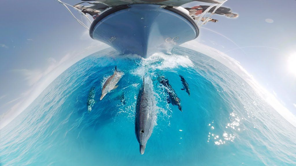 Gopro 360 Vr Swimming With Dolphins Underwater Video Dolphins