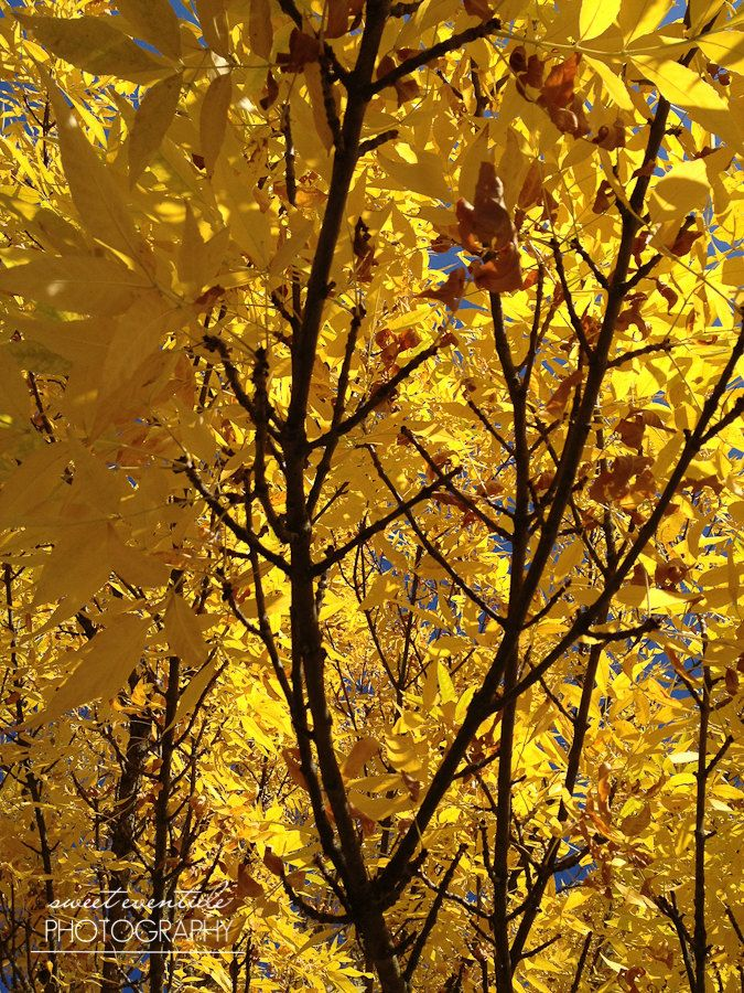 Nature Photograph Leaves Branches Trees Autumn Fall Yellow Golden ...