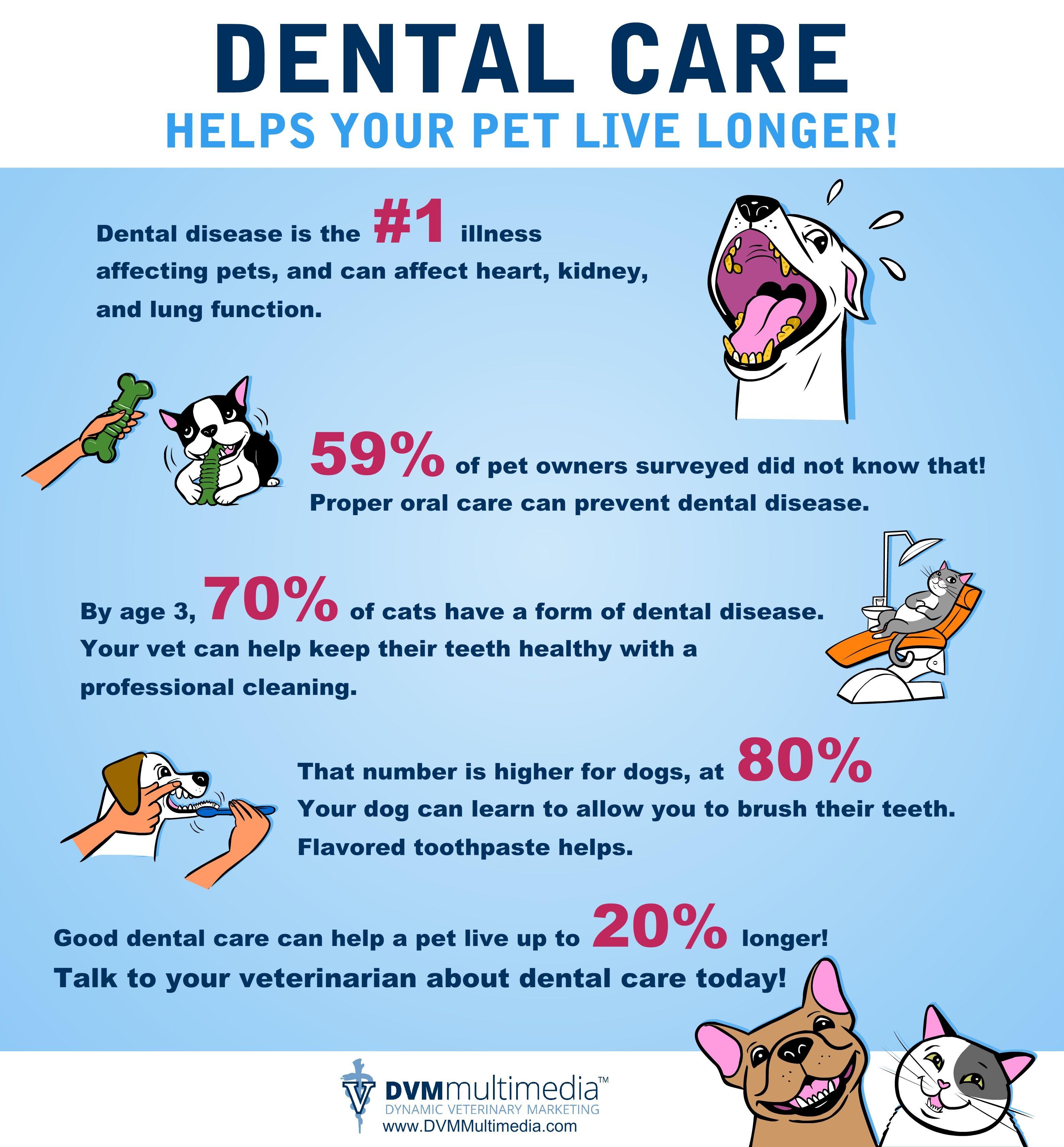 Reminder Pup Er Dental Care Helps Your Pet Live Longer Infographic Pet Dental Health Pet Dental Care Dental Care