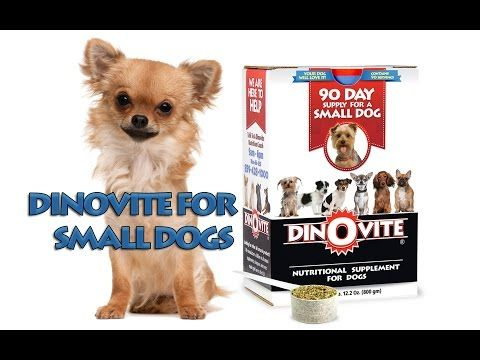 Dinovite For Small Dogs Pets Small Dogs Dogs Natural Dog Shampoo