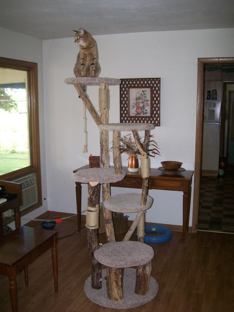 cat tree diy branch homemade for cats betes a poils pinterest chat arbres chat. Black Bedroom Furniture Sets. Home Design Ideas