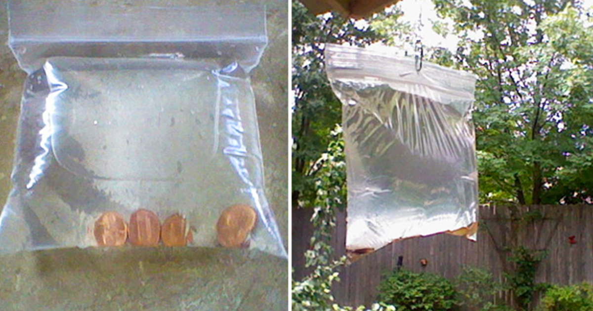 I Can T Believe A Bag Of Pennies Can Actually Do That Whoa Flies Repellent Outdoor Fly Repellant Diy Fly Repellant