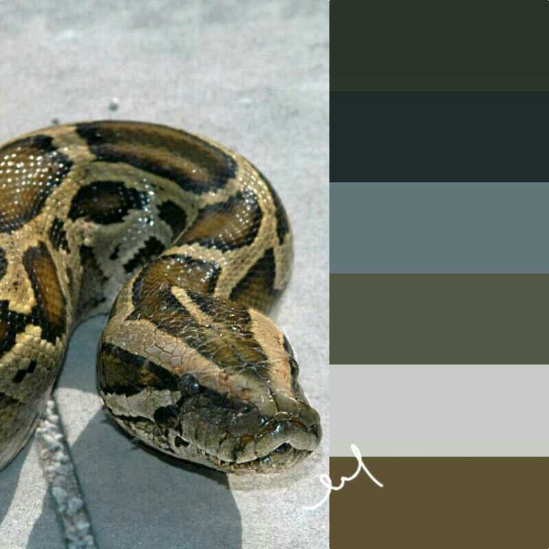 Egads!- my daughter brought a baby one home yesterday to raise as a new pet!-Color palette