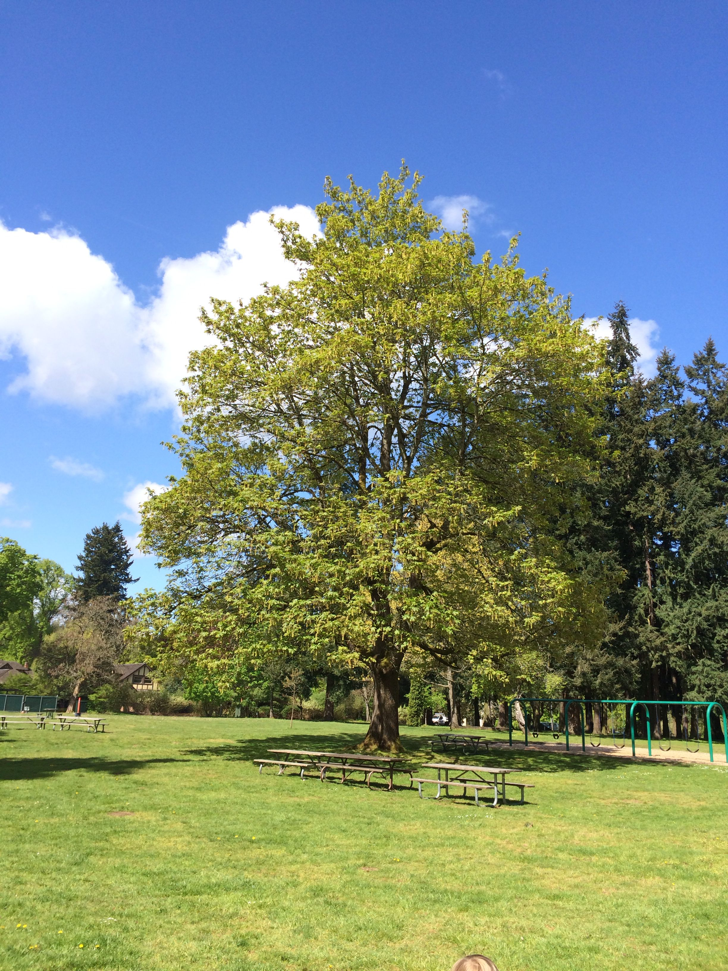 Marymoor Park Redmond, Washington