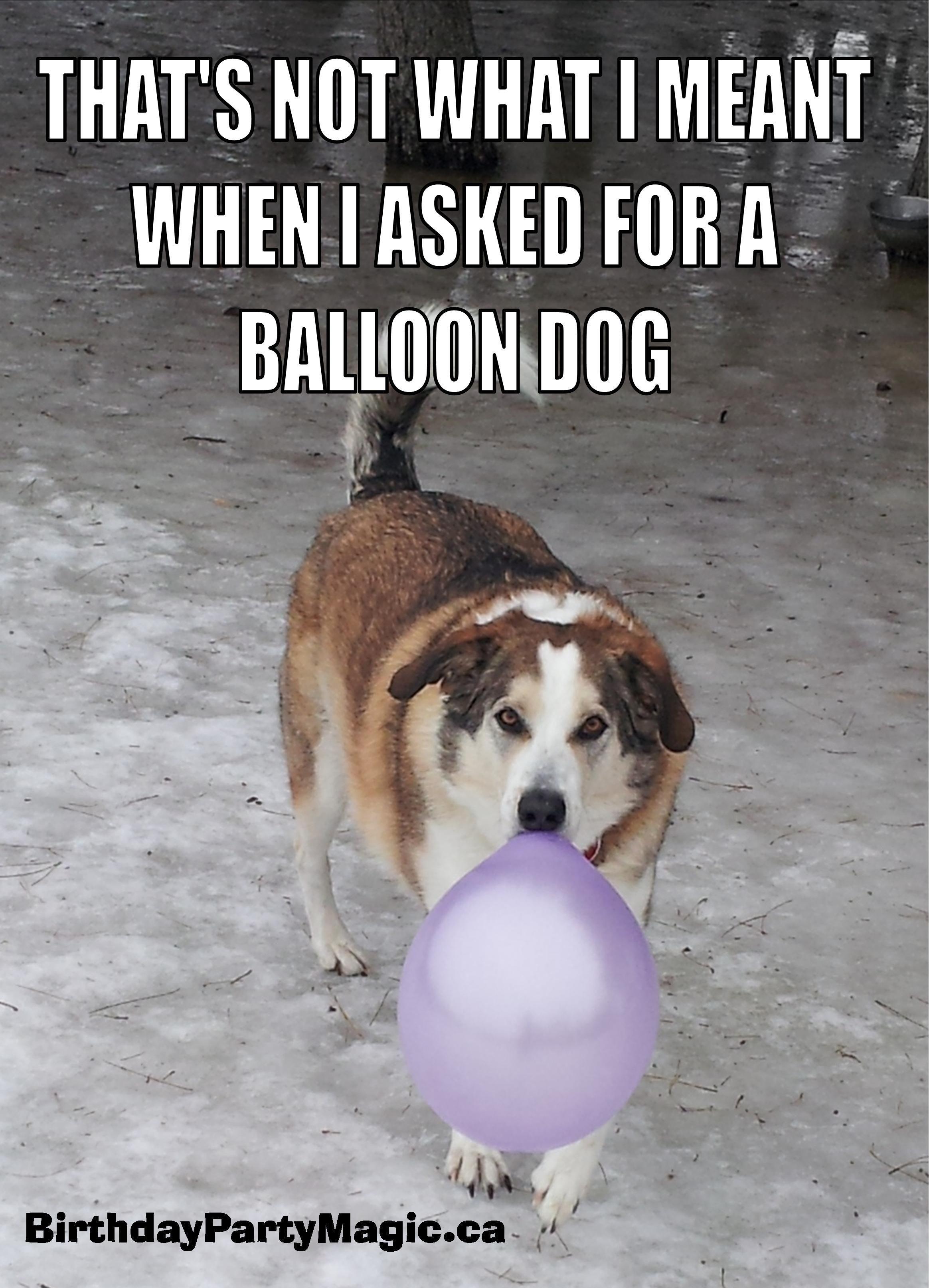 Balloon Dog Meme Balloon dog, Dog memes, Balloons