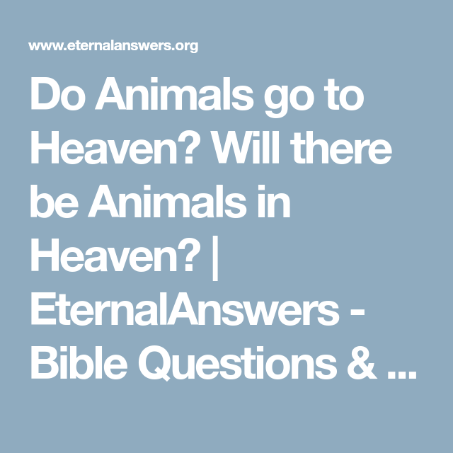 Do Animals go to Heaven? Will there be Animals in Heaven
