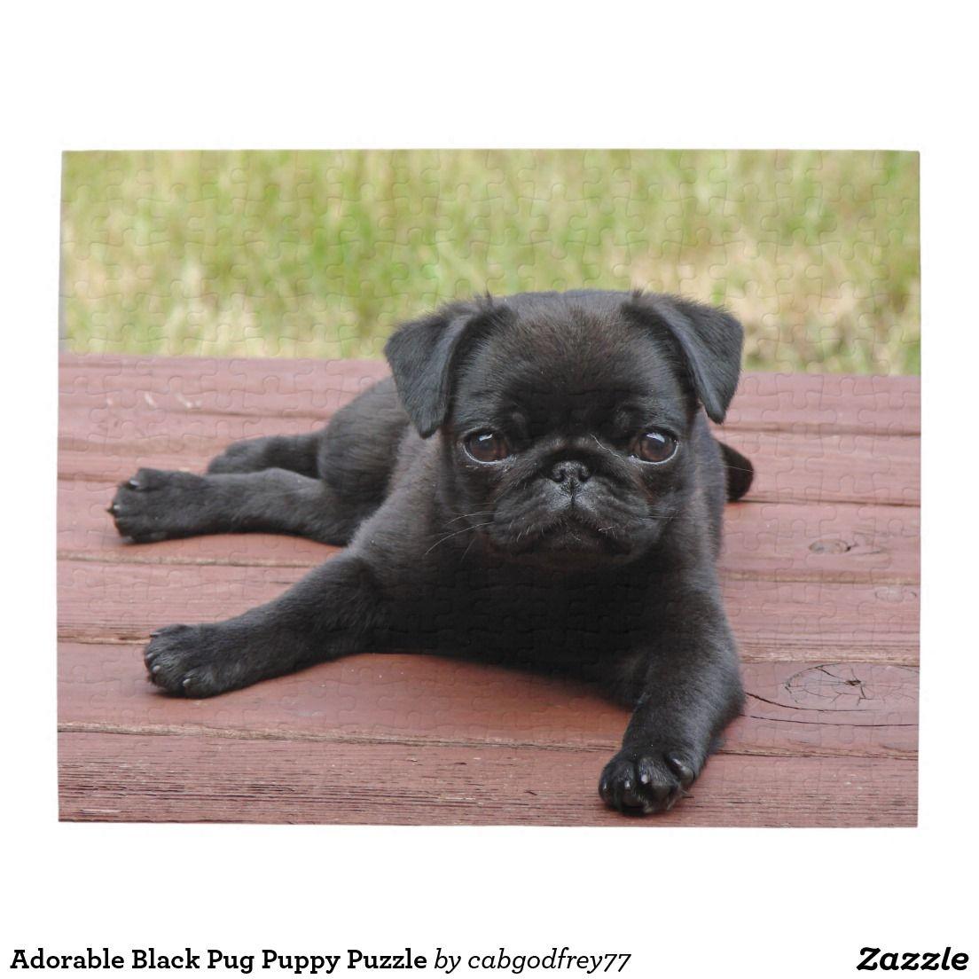 Adorable Black Pug Puppy Puzzle Zazzle Com Cute Pugs Cute Pug
