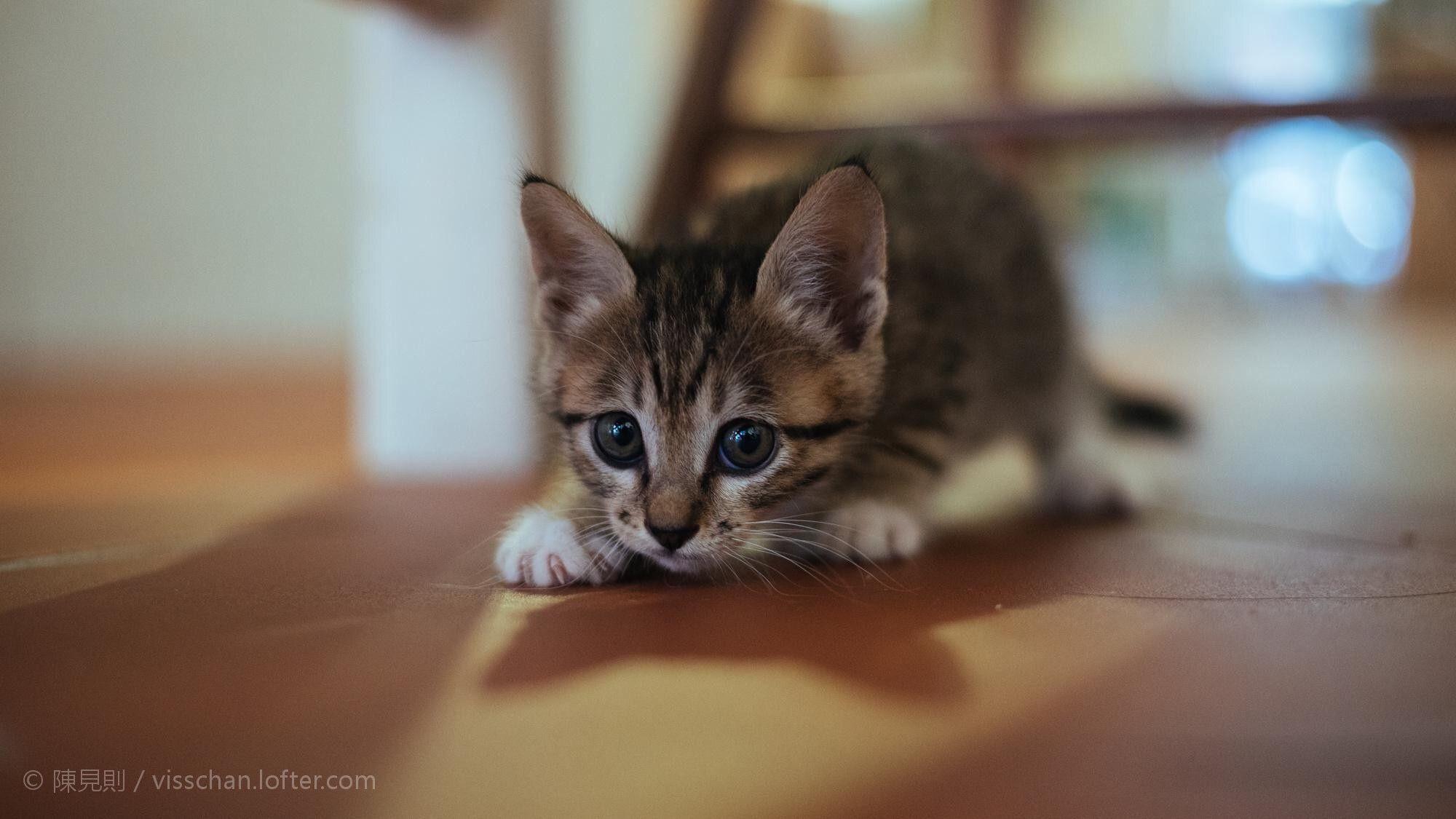 Careful Cat. -