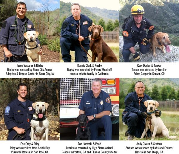 Search And Rescue Teams From The U S Deployed To Nepal Rescue Team Dogs Rescue Dogs