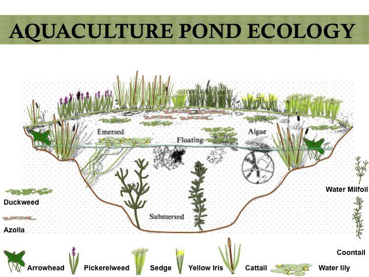 Water Pond Design Ideas