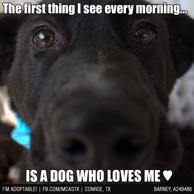 That Morning View Mcaspets Dogs Inyourface Dogs Dog Quotes Black Labrador