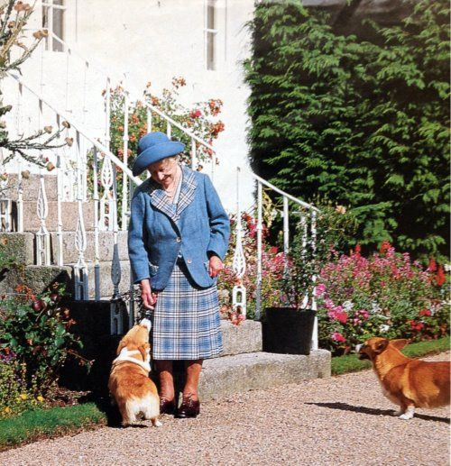 The Queen Mum at Birkhall, Scotland with her corgis.