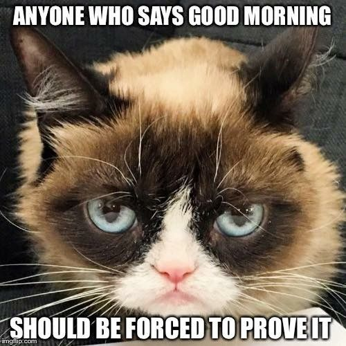 Anyone Who Says Good Morning Should Be Forced To Prove It Good Morning Funny Pictures Funny Good Morning Memes Funny Grumpy Cat Memes