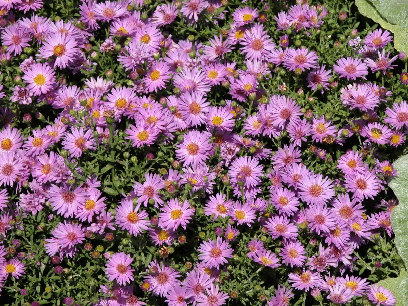 15 Of The Best Fall Perennial Flowers Flowers Pinterest